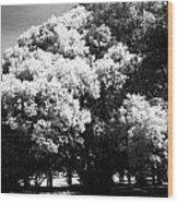 Picnic Tree Wood Print
