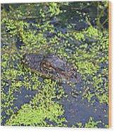 31- Alligator Hatchling Wood Print