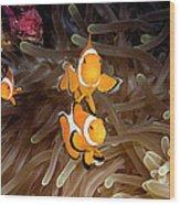 Wakatobi Wood Print