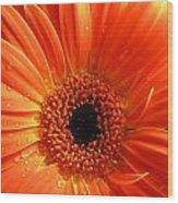 3347-004 Wood Print