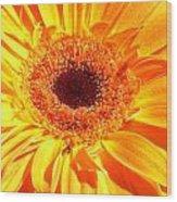3410-005 Wood Print