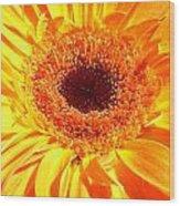 3410-008 Wood Print