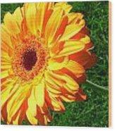 3411-001 Wood Print