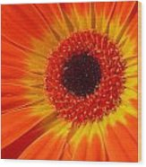 3436-002 Wood Print