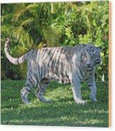 35- White Bengal Tiger Wood Print