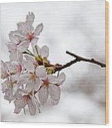 Cherry Blossoms Wood Print