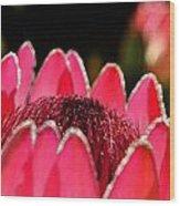 Protea Blossom Wood Print