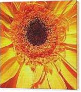 3840c Wood Print