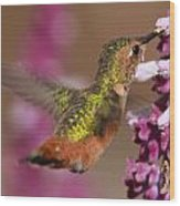 Allens Hummingbird Wood Print
