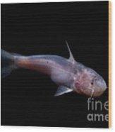 Amazon River Catfish Wood Print