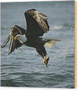 An American Bald Eagle In Flight Wood Print