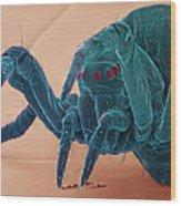 Baby Spider, Sem Wood Print