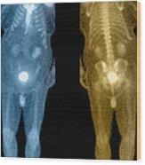 Bone Scan Wood Print