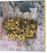 Bumblebee Nest Wood Print