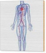Cardiovascular System, Artwork Wood Print