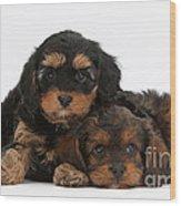 Cavapoo Pups Wood Print