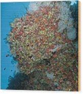 Colourful Reef Scene, Ari And Male Wood Print