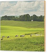 Cows Grazing On Grass In Farm Field Summer Maine Wood Print