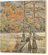 Cypress Trees In The Mist Wood Print by Iris Greenwell