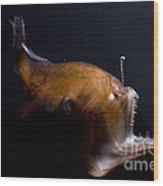 Deep Sea Angler Wood Print
