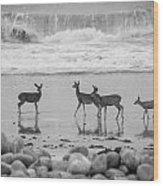 4 Deer In Surf Black And White Wood Print