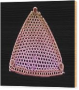 Diatom Alga, Sem Wood Print
