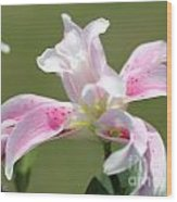 Double Oriental Lily Named Magic Star Wood Print