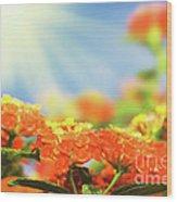 Floral Background. Lantana Flowers Wood Print