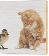 Ginger Kitten And Mallard Duckling Wood Print