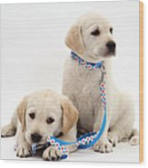 Goldidor Retriever Puppies Wood Print by Jane Burton