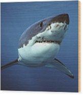 Great White Shark Carcharodon Wood Print