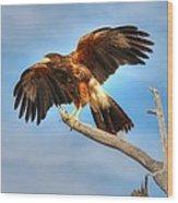 Harris Hawk Wood Print