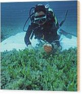 Invasive Seaweed Control Wood Print by Alexis Rosenfeld