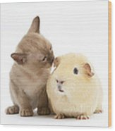Kitten And Guinea Pig Wood Print