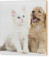 Kitten And Puppy Wood Print