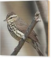 Northern Waterthrush Wood Print