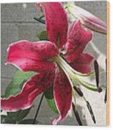 Orienpet Lily Named Scarlet Delight Wood Print
