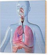 Respiratory System, Artwork Wood Print