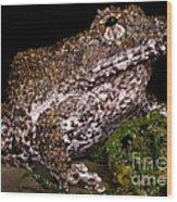 Rusty Robber Frog Wood Print