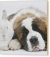 Saint Bernard Puppy With Rabbit Wood Print