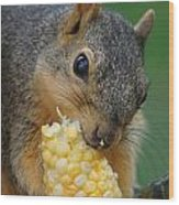 Squirrel Eating Sweet Corn Wood Print
