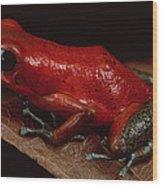 Strawberry Poison Dart Frog Dendrobates Wood Print