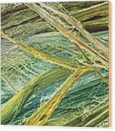 Tendon Fibres, Sem Wood Print
