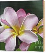 Tropical Frangrapani Wood Print