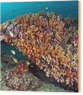 Tropical Reef, Indonesia Wood Print
