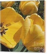 Tulip Named Big Smile Wood Print