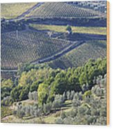 Vineyards And Olive Groves Wood Print