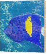 Yellowbar Angelfish Wood Print