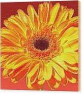 4183-001 Wood Print