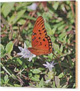 42- Fritillary Butterfly Wood Print